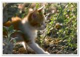 wild little stalker