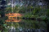 botanic garden dam.jpg