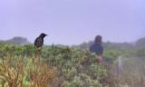 Great Ocean Road Victoria Australia5.jpg