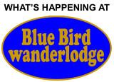 WHAT'S HAPPENING AT BLUEBIRD WANDERLODGE