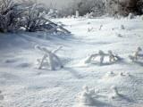 snow spiders