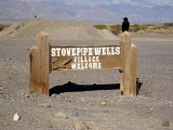 Stovepipe Wells raven