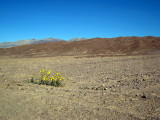 life in Death Valley