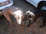 Steely & Hans' dog