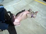 my goofy dog