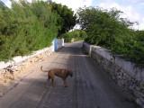 A Dog on an Empty Street