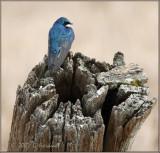 Little Bird on a Big Perch