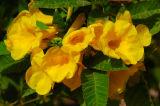 Touching Yellows