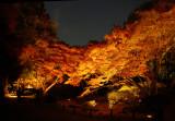 Autumn Night Scene