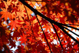 Autumn Red Colours