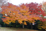 Autumn Colours on the Trees