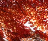 Natural Autumn reds