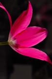 A flower profile