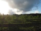 Landscape7.jpg