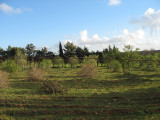 Landscape8.jpg