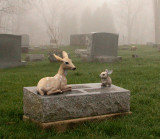 stone with fawn and bunny... in the fog...