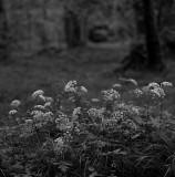 Marshland Flowers