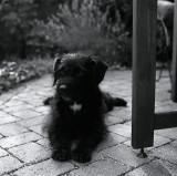 My mom's dog