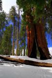 SequoiaNP_8220.jpg