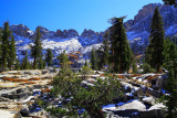 SequoiaNP_8410.jpg