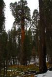 SequoiaNP_8268.jpg