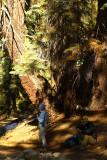 SequoiaNP_8374.jpg