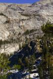 SequoiaNP_8385-2.jpg