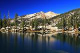 SequoiaNP_8405.jpg