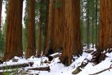 SequoiaNP-MM-Final_8299.jpg