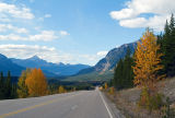 Icefields Parkway Autumn