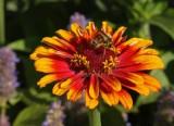 Sunburst and bee