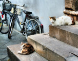 We are too lazy today to ride a bicycle....