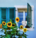 The windows which had a secret affair with sunflowers...