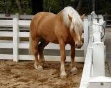 That Saddle? Me? Fugeddaboudit!