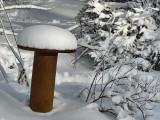 Mushroom of December