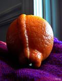 Orange Nap