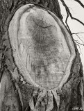 Tree with Smile