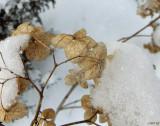 Snowy Flowerlet