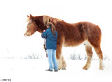 Clydesdale: Gentle Giant