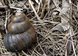 Snail Trailer: Micro RV