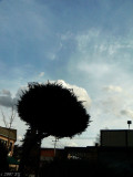 A Bush Sees a Possum in the Clouds