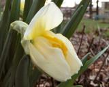 Maiden Flower