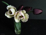 Purple Tulips and White
