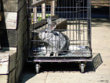 Bunnymobile