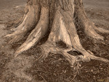 Well-Rooted Family Tree