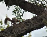 Perplexed Squirrel