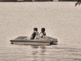 Paddleboat Evening