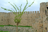 Turkey-Caravanserais View - Tree and Fort