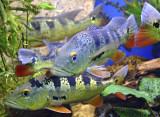 Miraflores Lock - Aquarium