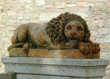 The Assisi Lion - number 2
